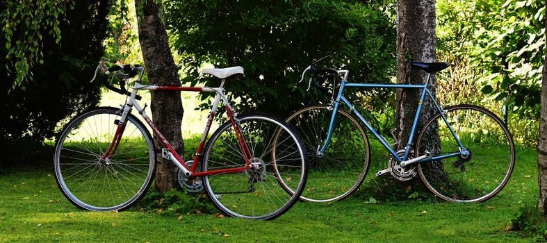 a red bicycle and a blue bicycle leaning against trees