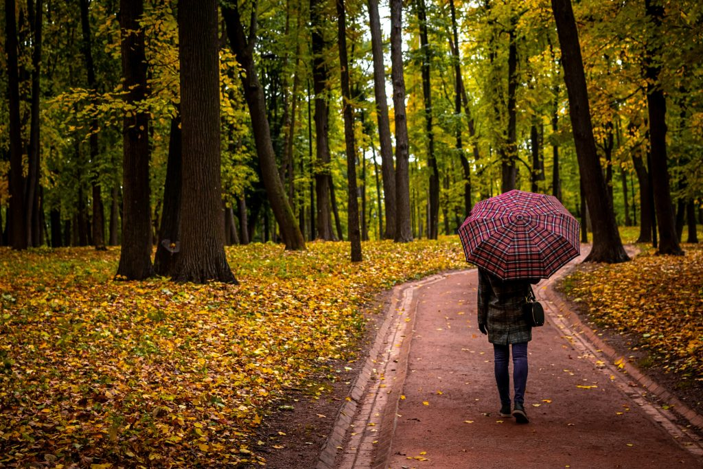 person walking along a forest trail with an umbrella