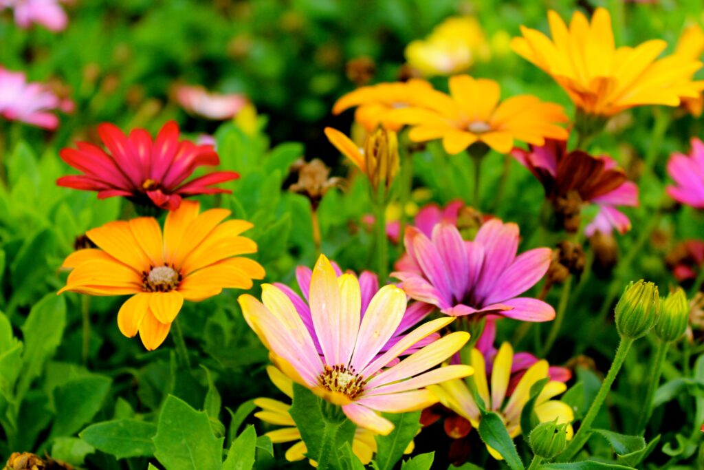 image of colourful flowers