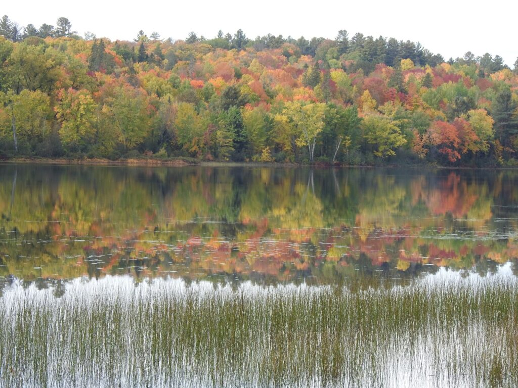 image of forest with leaves in fall colours
